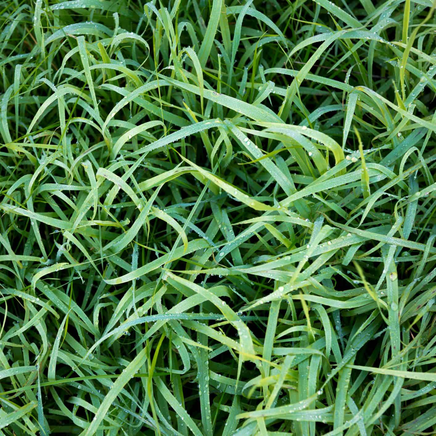6 Winter Care Tips for Your Lawn