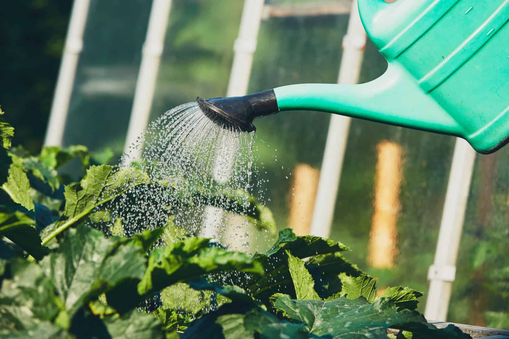 Questions You Need to Ask Before Hiring a Landscaper