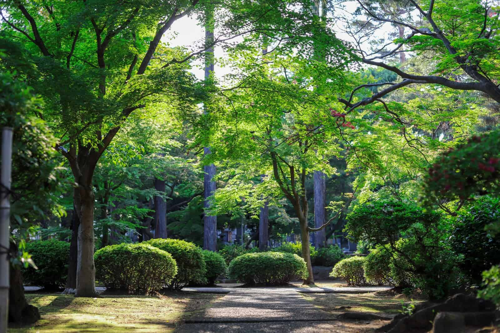 green-leafed tall trees