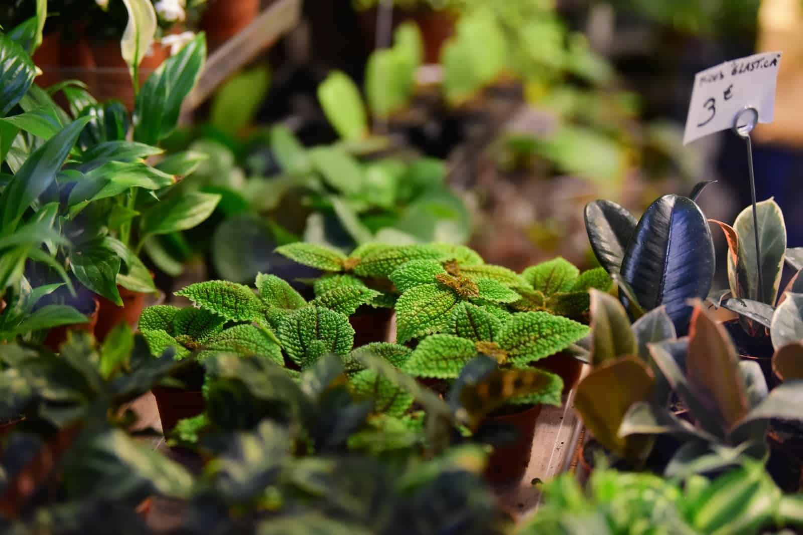 selective focus of plants