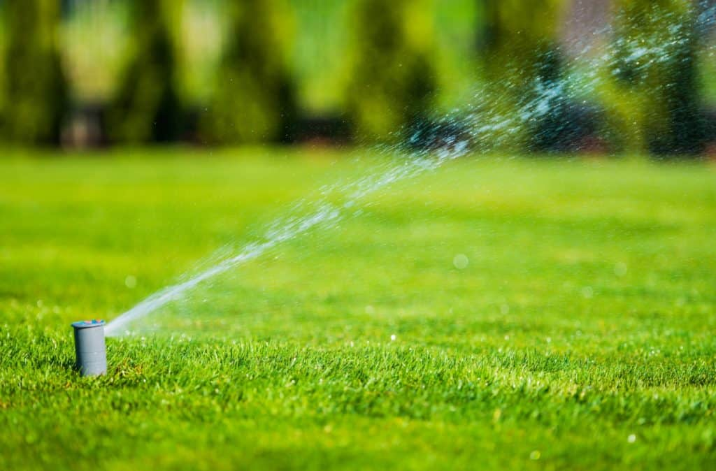 The Most Common Lawn Care Myths You Need to Stop Believing